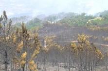 Incêndio corta A7 entre Ribeira de Pena e Arco de Baúlhe
