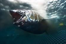 Pesqueiro português apreendido em França por pesca de espécies protegidas