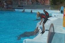Golfinhos atraem milhares de pessoas a Albufeira