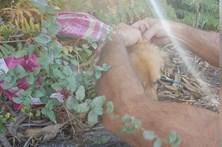 Bombeiros salvam cadela presa dentro de saco amarrado