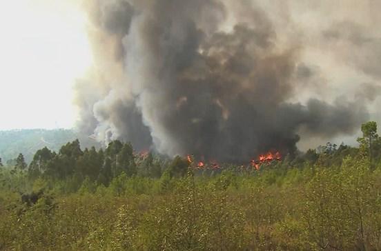 Direção Geral da Saúde alerta para riscos de exposição ao fumo dos incêndios