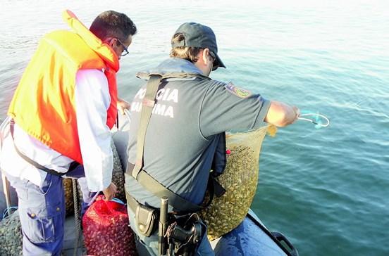 Polícia Marítima lança caça aos mariscadores