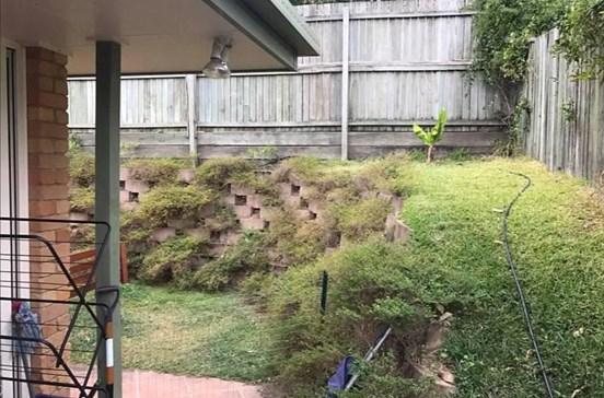 Tinha píton gigante escondida no quintal