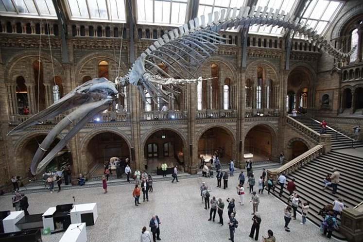 Criança corrige Museu de História Natural londrino