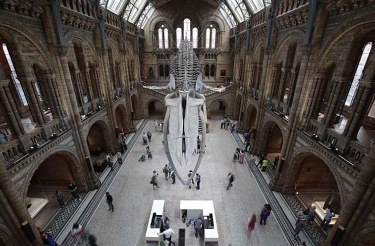 Criança deteta erro em museu de Londres