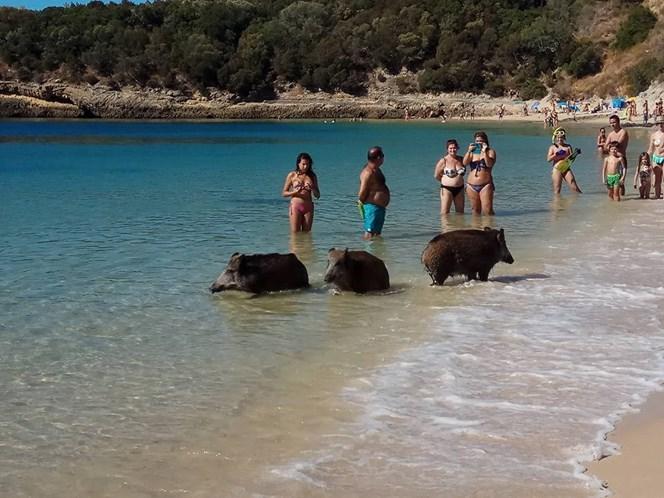 bdsm portugal sexo na praia