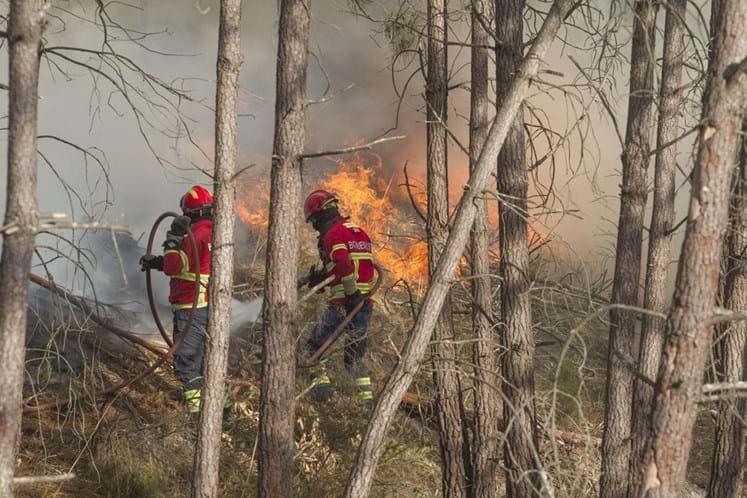 Incêndios: Pinhal de novo em chamas