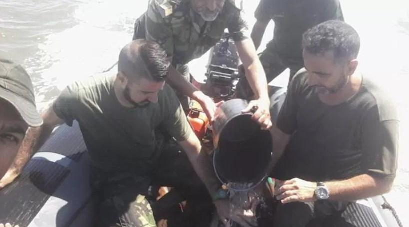 Resultado de imagem para Fuzileiros resgatam golfinho encalhado no Rio Coina