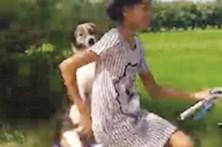 Cão adora andar de bicicleta