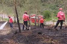 """""""Este é o ponto de rutura"""", diz secretário de Estado das Florestas"""