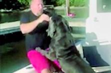 Cão empurra dono para dentro de água