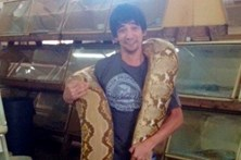 Mostra morte com dentada de cobra venenosa em direto