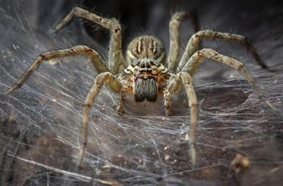 Sala da Universidade de Oxford tem milhares de aranhas