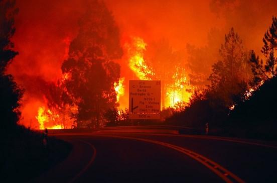 Aprovado pacote de 186 milhões para resposta e prevenção aos incêndios