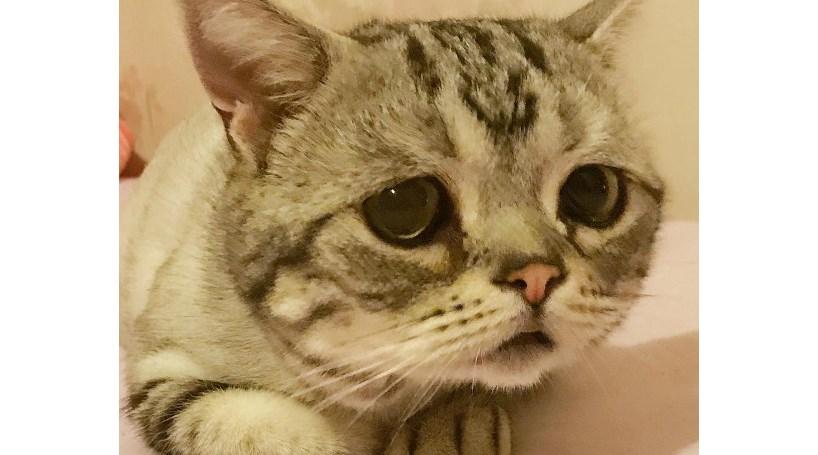 Conheça a gata mais triste do mundo