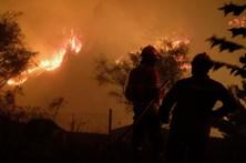 Fogo destruiu dez casas e 70 a 80% da floresta de Carregal do Sal