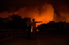 Governo concede 5,4 milhões para agricultores afectados pelos fogos de Pedrógão