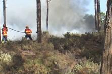Pelo menos 80% de floresta ardeu na Marinha Grande