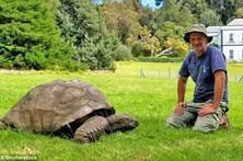 Tartaruga mais velha do mundo é homossexual