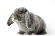 Candidato enganado por coelhos antidroga