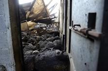 Milhares de animais mortos são risco ambiental na Beira