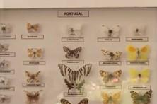 A magia das borboletas em Cascais