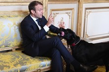 Cão de Macron alivia-se na lareira durante reunião de ministros
