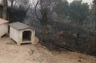 Pai e filha salvam dezenas de cães das chamas em Gouveia