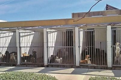 Centro de recolha animal em Mirandela acolhe 1400 cães e gatos