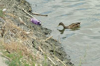 Moita alerta para aves e peixes mortos no rio