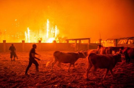 PSD diz que Governo pode contar com partido no combate aos fogos
