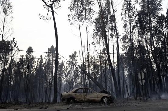 Oitenta por cento da floresta de Santa Comba Dão ficou destruída