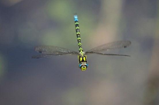 Número de insetos voadores na Alemanha caiu 76% desde 1989