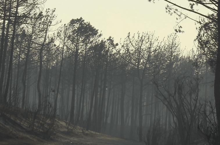 PJ confirma mão criminosa no incêndio no Pinhal de Leiria