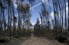 CDS admite divulgação parcial do capítulo de relatório sobre mortes em fogos