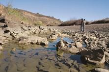 Governo aumenta para quase cem camiões-cisterna com água ajuda à região de Viseu