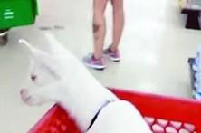 Mulher leva animal 'invulgar' às compras