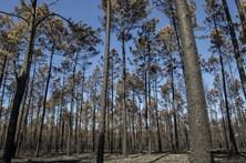 1.200 atletas vão ajudar na reflorestação das zonas afetadas pelos fogos