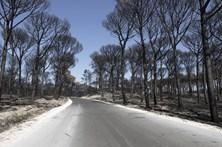 Estradas da Marinha Grande fechadas por risco de queda de árvores