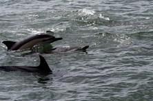 Salvam 60 golfinhos em dia de pesca