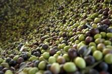 Seis detidos por furto de uma tonelada de azeitona no Alentejo