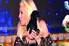 Cão defeca em cima de apresentadora de TV