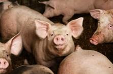 Brasil nega receber notificação da Rússia sobre suspensão da exportação de carnes