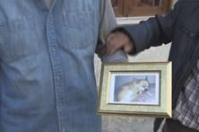 Pit bull mata outro cão e fere o dono na Moita