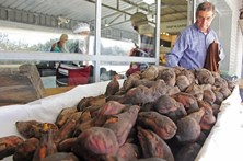 Festival de batata-doce destaca produto local