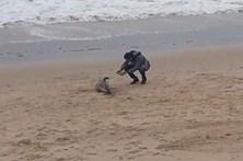 Golfinho dá à costa em praia de Caxias
