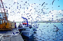 Empresa municipal quer gaivotas fora de Portimão