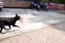 Cão alimenta crias com recém-nascido morto