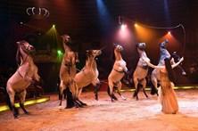 Petição contra utilização de animais nos circos já reuniu 16 mil assinaturas