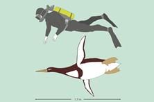 Pinguins do tamanho do homem habitaram Nova Zelândia